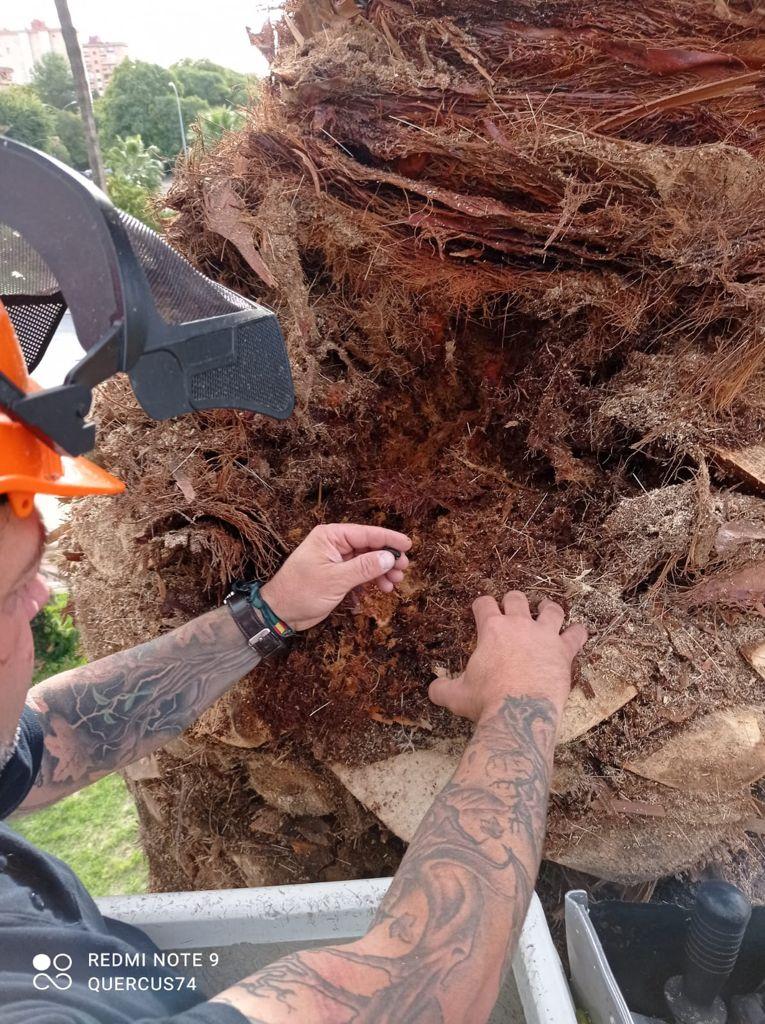 Arborista: creciendo con el árbol 2