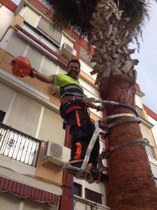 Arborista: creciendo con el árbol 1